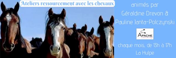 Atelier ressourcement avec les chevaux