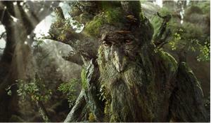 Les arbres communiquent entre eux