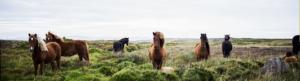 MA RELATION À L'AMOUR (avec les chevaux) @ ASBL Équi-libres  (La Hulpe)