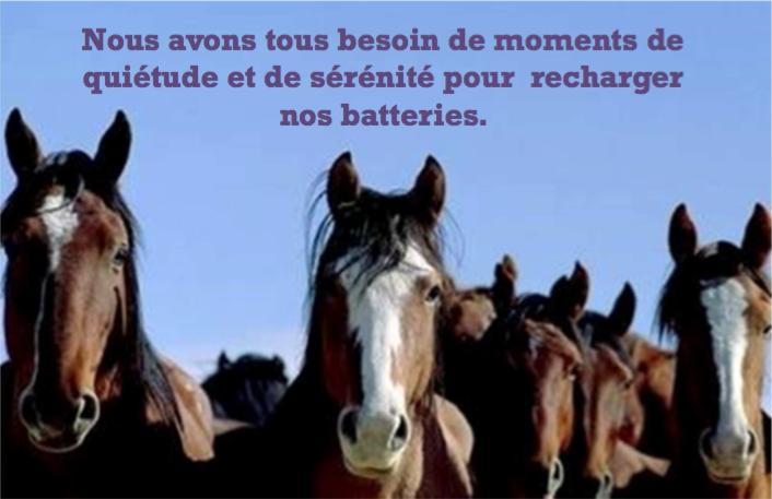Atelier de ressourcement avec les chevaux